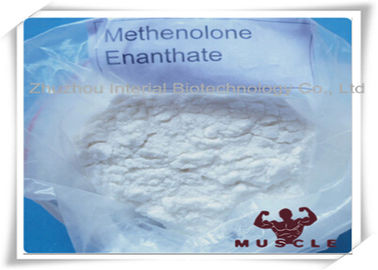 Porcellana 99% Purity Methenolone Enanthate/Primobolan Depot Muscle Building Steroids CAS 303-42-4 fabbrica